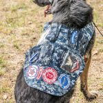 A dog, similar to a German Shepherd, sits with his back to the camera. He is wearing a camouflage vest with patches to indicate he is a service dog and who he belongs to.